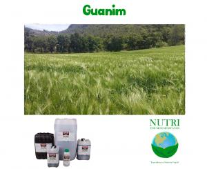 guanim2
