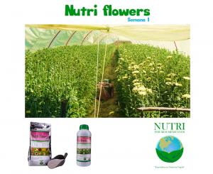 nutriflowerssemana1