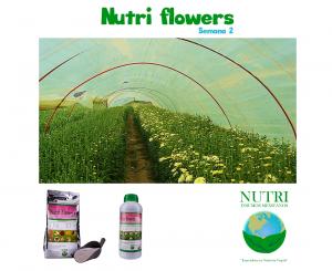 nutriflowerssemana2