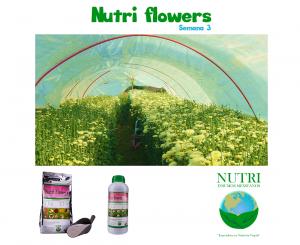 nutriflowerssemana3