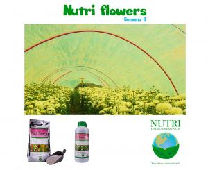 nutriflowerssemana4